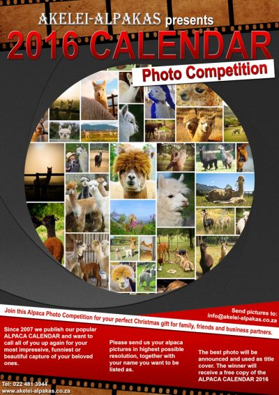 Alpaca Calendar Competition